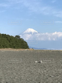 三保の松原の写真・画像素材[460139]