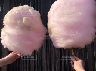 ピンクの写真・画像素材[460413]