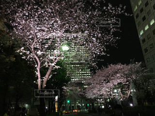 nightの写真・画像素材[460570]