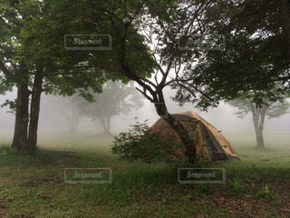 自然の写真・画像素材[460658]
