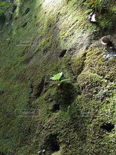 自然の写真・画像素材[460712]