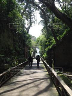 自然の写真・画像素材[460713]