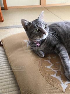 美猫の写真・画像素材[1012469]