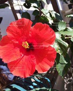 花の写真・画像素材[552363]