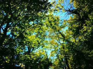 自然の写真・画像素材[460910]