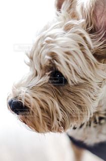 犬 - No.554593