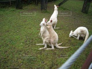 動物の写真・画像素材[461674]