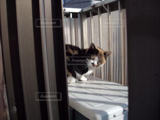猫の写真・画像素材[461678]