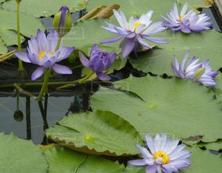 花の写真・画像素材[461697]