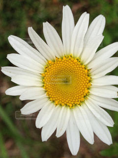 自然の写真・画像素材[501336]