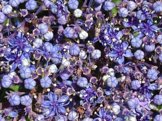 花の写真・画像素材[617032]