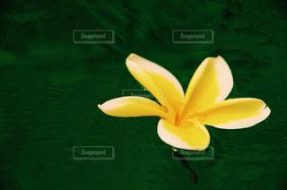 花の写真・画像素材[484524]