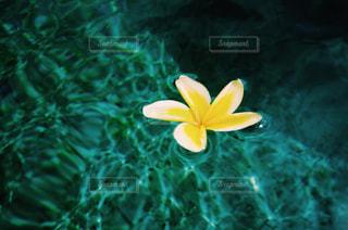 花の写真・画像素材[484525]