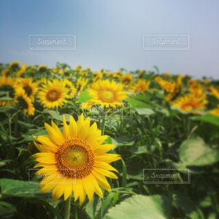 花の写真・画像素材[461606]