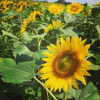 花の写真・画像素材[461607]