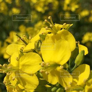 花の写真・画像素材[461614]