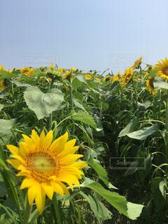 花の写真・画像素材[461632]