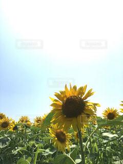 花の写真・画像素材[461634]