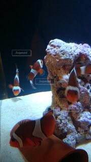 魚 - No.461688
