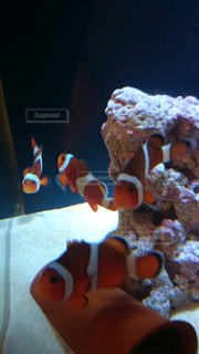 魚の写真・画像素材[461689]