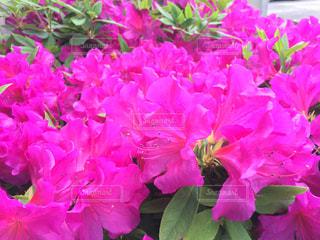 花の写真・画像素材[464248]