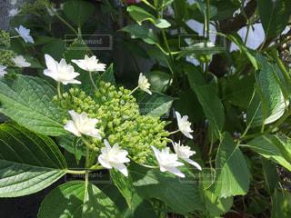 花の写真・画像素材[537448]
