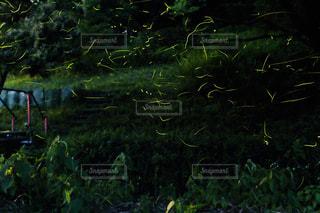近くに緑豊かな緑のフィールドのの写真・画像素材[1227106]