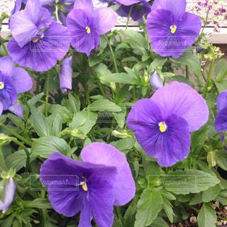 花の写真・画像素材[461757]
