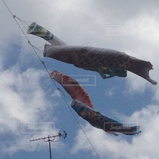 鯉のぼりの写真・画像素材[461765]