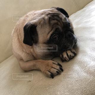 犬の写真・画像素材[462276]