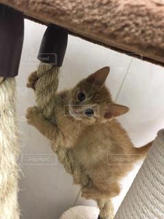 No.554391 猫