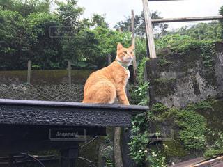 猫の写真・画像素材[470107]