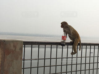 猿の写真・画像素材[470180]