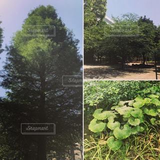 公園の写真・画像素材[471287]
