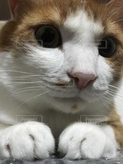 猫の写真・画像素材[463728]