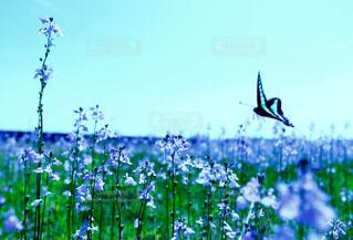 花の写真・画像素材[473720]