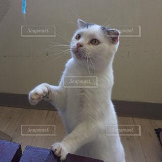 No.507901 猫