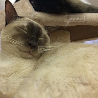 猫の写真・画像素材[507915]