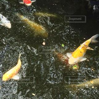 池 - No.507921