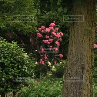 木の写真・画像素材[535711]