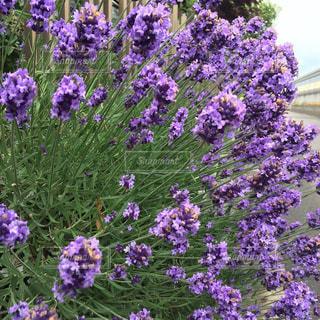 植物の写真・画像素材[572075]