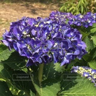 植物の写真・画像素材[572081]