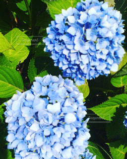 花の写真・画像素材[583745]