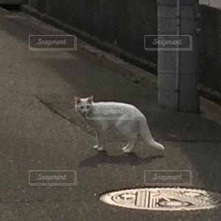 猫の写真・画像素材[590154]