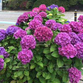 花の写真・画像素材[603361]