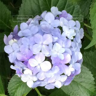 花 - No.609635
