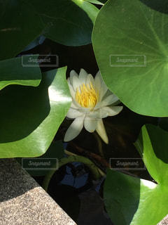 自然の写真・画像素材[651101]