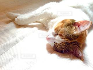 猫の写真・画像素材[467784]