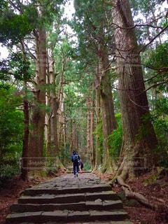 森の写真・画像素材[473400]