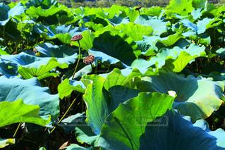 庭園の緑の植物 - No.764038